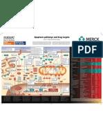 Apoptosis Pathway and Drug Targets