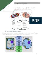 comparaison cellule végétale et animale