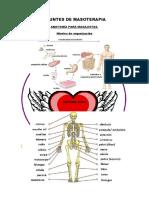 Apuntes de Masoterapia1