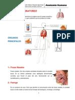sistema respiratorio_docx