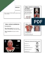 Anatoma Miologa Craneo Fono UPV PDF