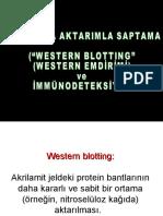 MBKY-II-4.ders-elek-II-WesternBlotlama