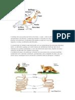 sistemna digestivo dos animais