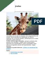 5.Tipos de jirafas