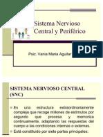 sistema-nervioso-