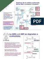 fenilalanina pdf