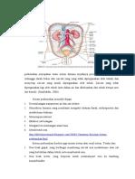 Anatomi Sistem Urinaria-1