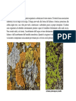 04a Lezione Botanica Generale 2009-10 Licheni Angiosperme Parte 1 Rid