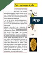 04a Lezione Botanica Generale 2009-10 Licheni Angiosperme Parte 2