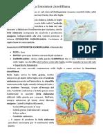 fotosintesi-clorofilliana-1