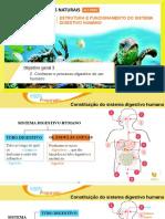 100% Preparado_ Estrutura e Funcionamento Do Sistema Digestivo Humano