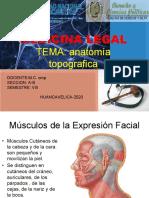 seminario musculos de la cara