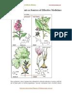 European Plants as Sources of Effective Medicines(ebooksearn.blogspot.com)