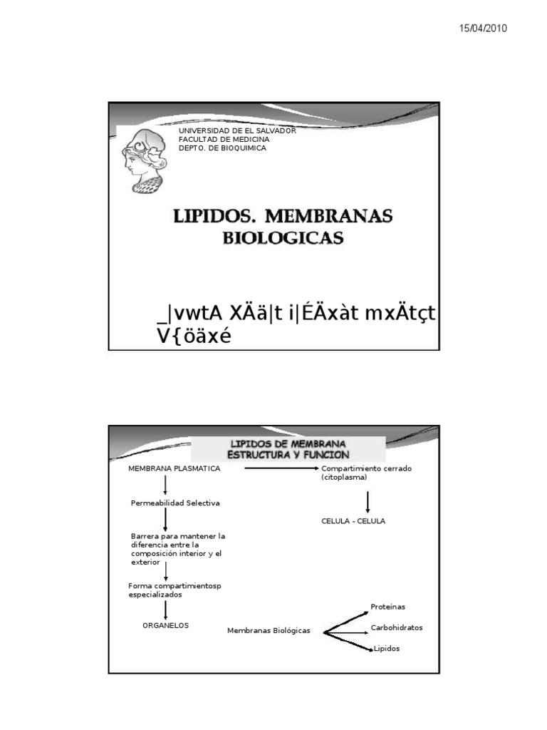 Clase 9 Lipidos Y Membranas Biologicas Membrana Celular