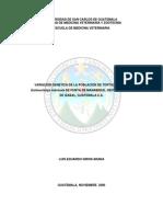 VARIACIÓN GENETICA DE LA POBLACIÓN DE TORTUGA CAREY Eretmochelys imbricata DE PUNTA DE MANABIQUE, DEPARTAMENTO DE IZABAL, GUATEMALA C.A.