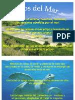 Protegiendo El Mar