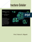 Estructura celular .PDF o  wikilibro