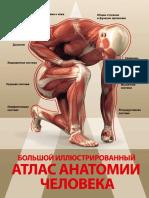 Спектор А. А. - Большой Иллюстрированный Атлас Анатомии Человека - 2016