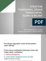 Struktur Fungsional Organ Pengucapan, Suara & Bicara