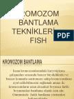 Kromozom Bantlama Ve Fish