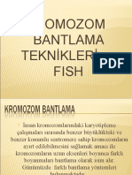 Kromozom Bantlama Ve Fish