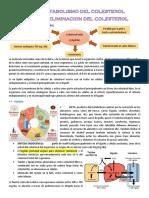 Bioquimica 2-TEMA 13