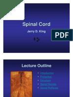 AP 05 Spinal Cord