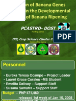 Isolation of banana genes involved in the developmental control of banana ripening