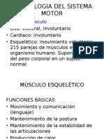 Contraccion Muscular II