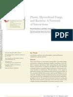 Plants Mycorrhiza and Bacteria
