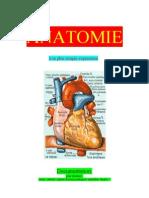 Médecine Anatomie à sa plus simple expression-Anamnese-Termes médicaux-Cours 6