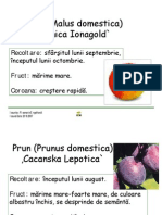 pomi_fructiferi