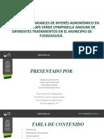Presentacion Pis Finall