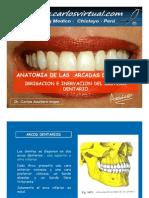 clase-101-arcos-dentarios-1232904047828597-1