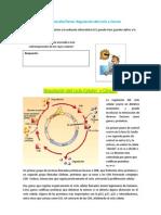 Guía de estudio- regulacion del ciclo celular y cáncer