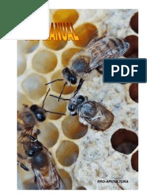 api arzător avansat de grăsime cum să mănânce)
