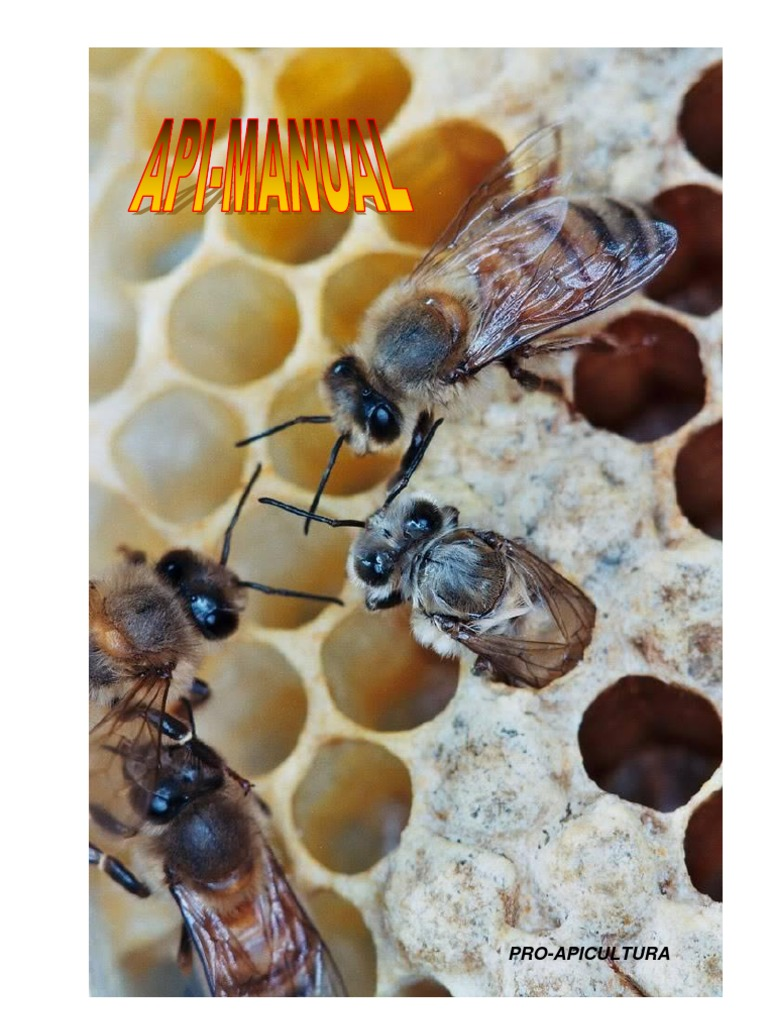 cum să vă măriți penisul cu albine)