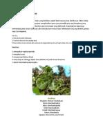 Divisi Hepatophyta