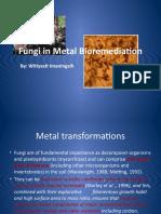 Metal Bio Remediation by Fungi