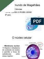 Aula núcleo e divisão celular 8º ano