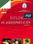 proyecto_palta