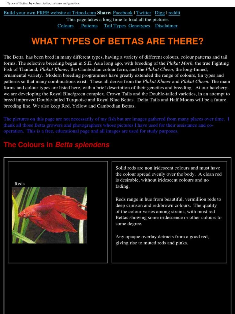 Betta Fish Dominance Genetics Blue
