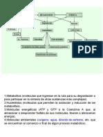 glucolisis aerobica