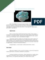 As Fases do desenvolvimento embrionário