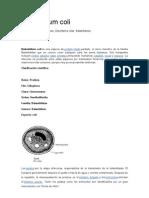 Balantidium coli Resumen