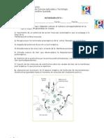Actividades Sinapsis y Neurotransmisores