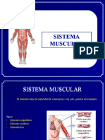 4. Martes 12 Abril - Sistema Muscular