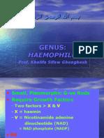 Lecture 22 Haemophilus