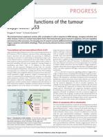 Cytoplasmic Functions of the Tumour Suppressor p53