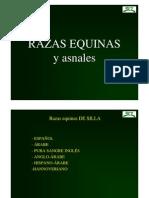 Razas_equinas-Practicas